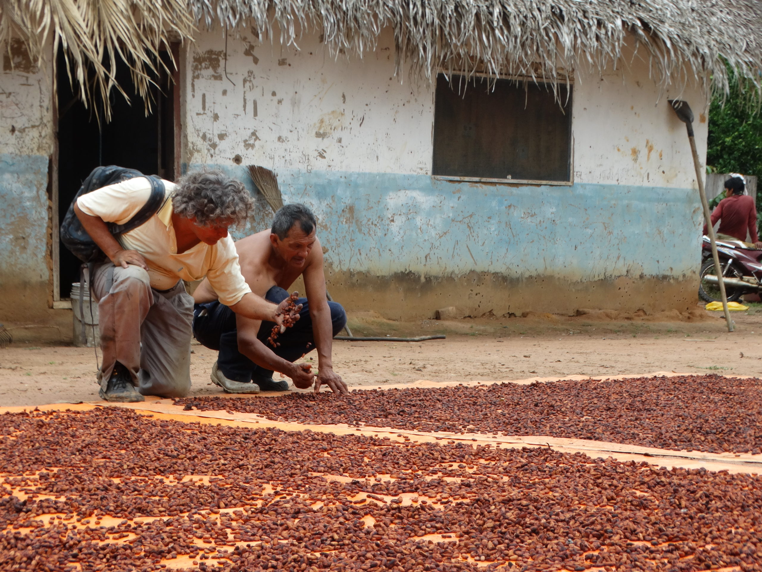 secando grano