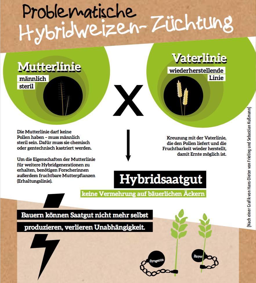 Hybridsaatgut-Züchtung