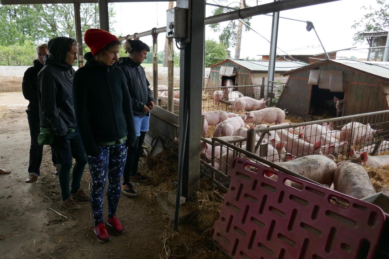 Besichtigung_Schweinehaltung
