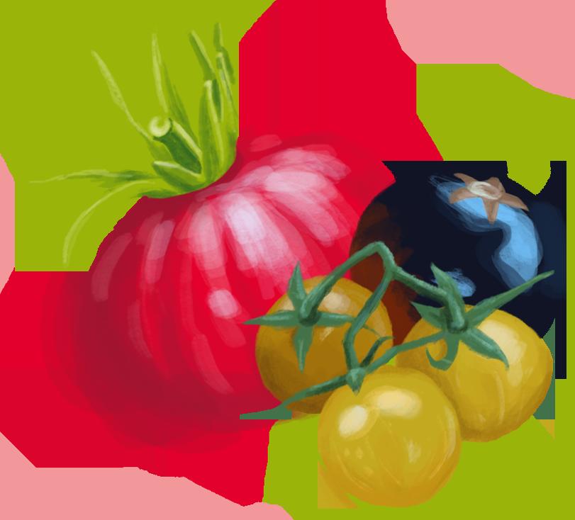 AA-Saatgut-Tomate-FUmland-RGB