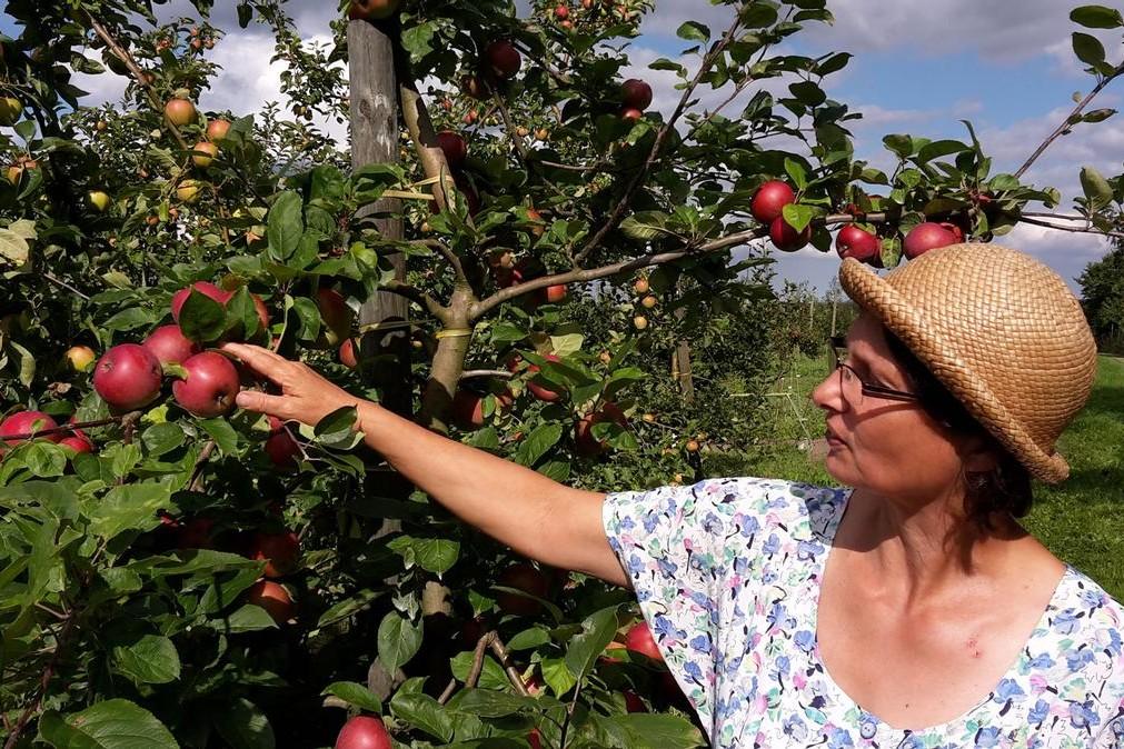 Apfelzuechtung-4-large