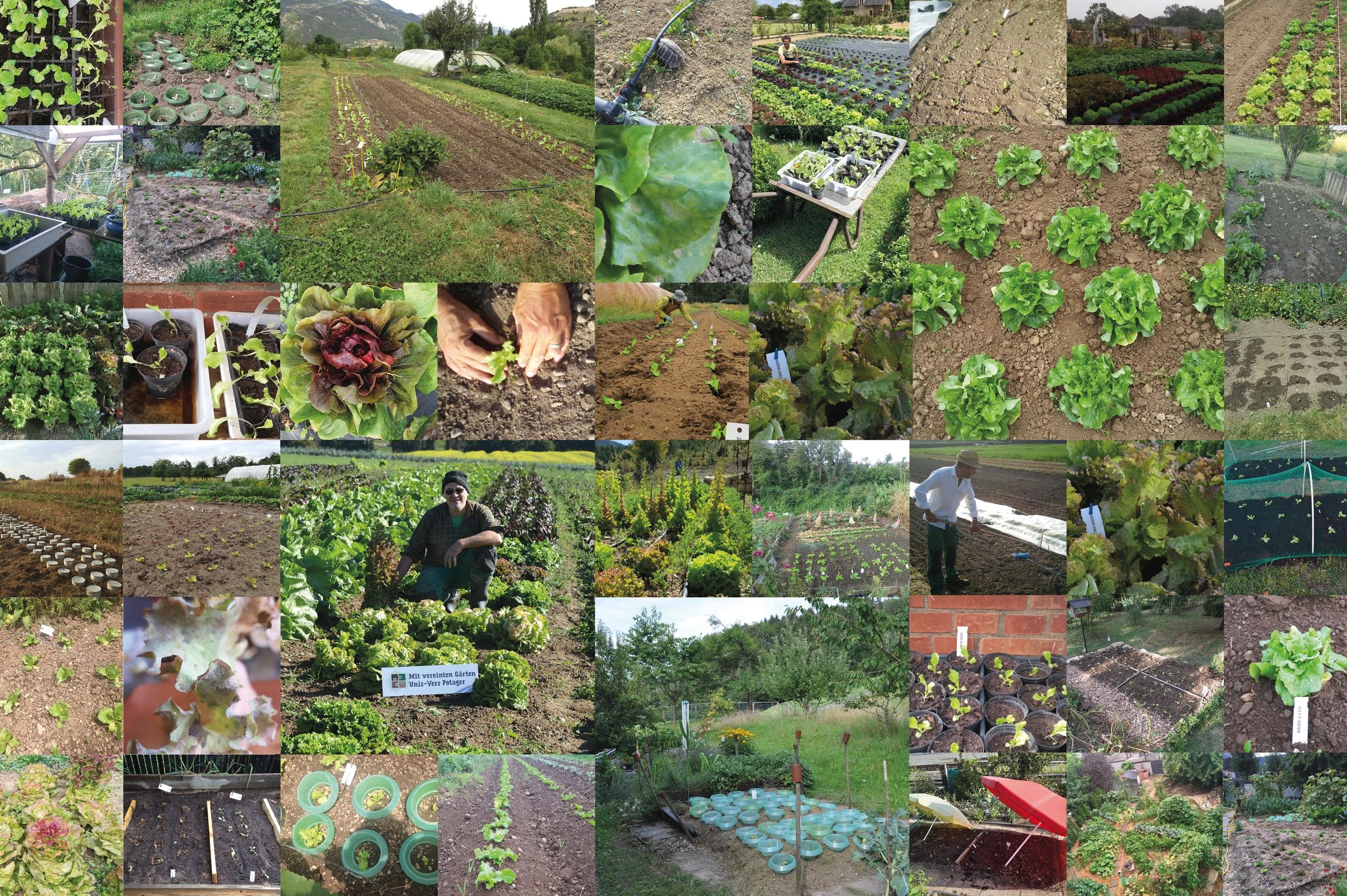 Mit vereinten Gärten - Collage2019