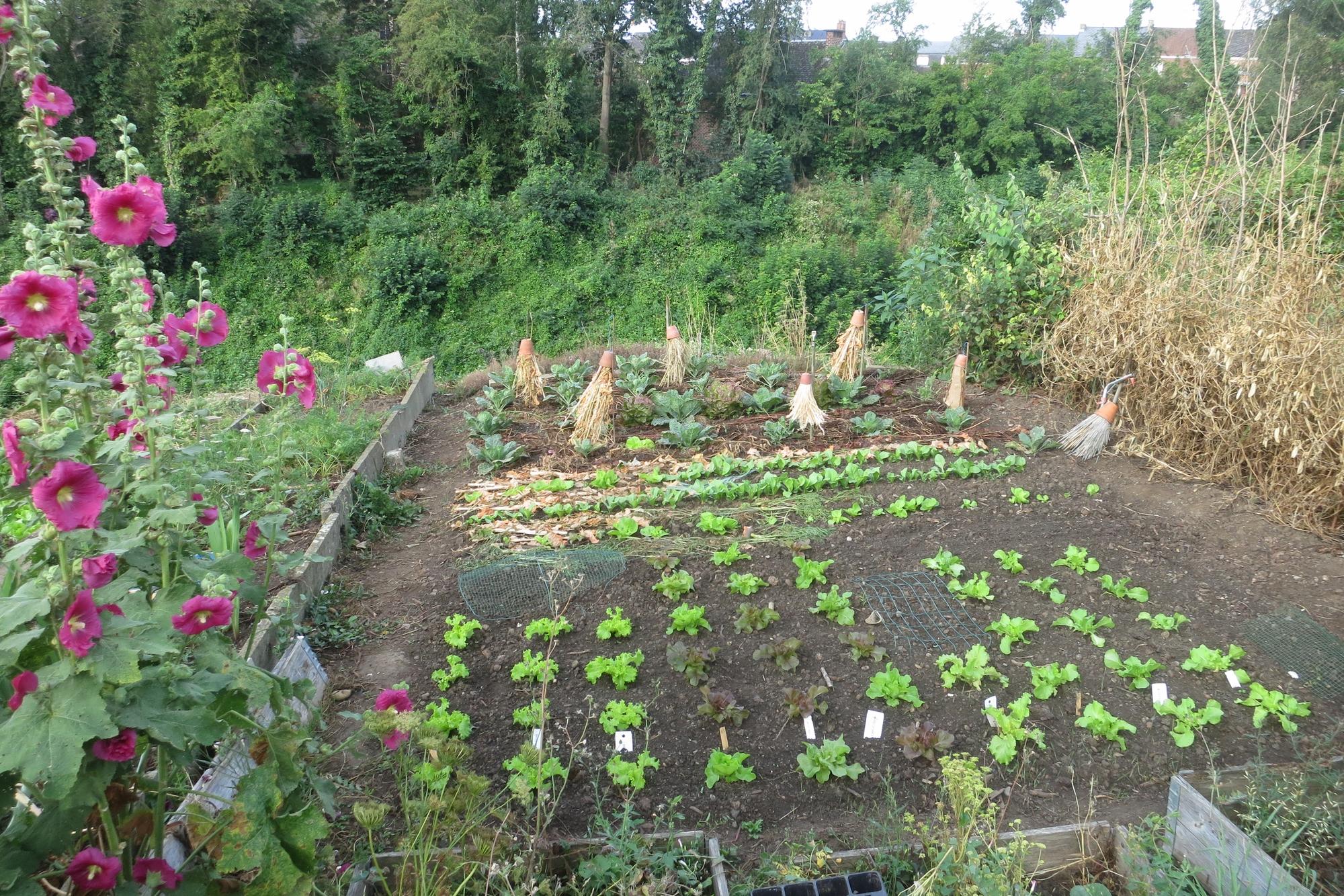 Mit vereinten Gärten - Teilnehmergarten Hobbygärtner aus Belgien