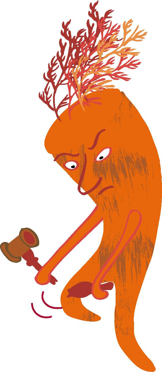 Orange Möhre